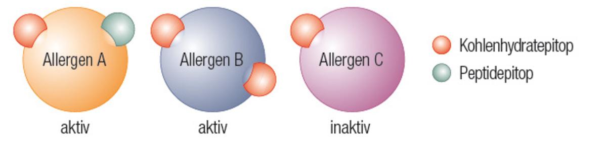 allergische reaktion typ 1